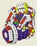 Molecular_motors